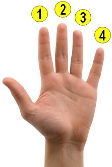 finger numbers